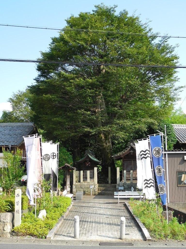 E528_sekisame1_10