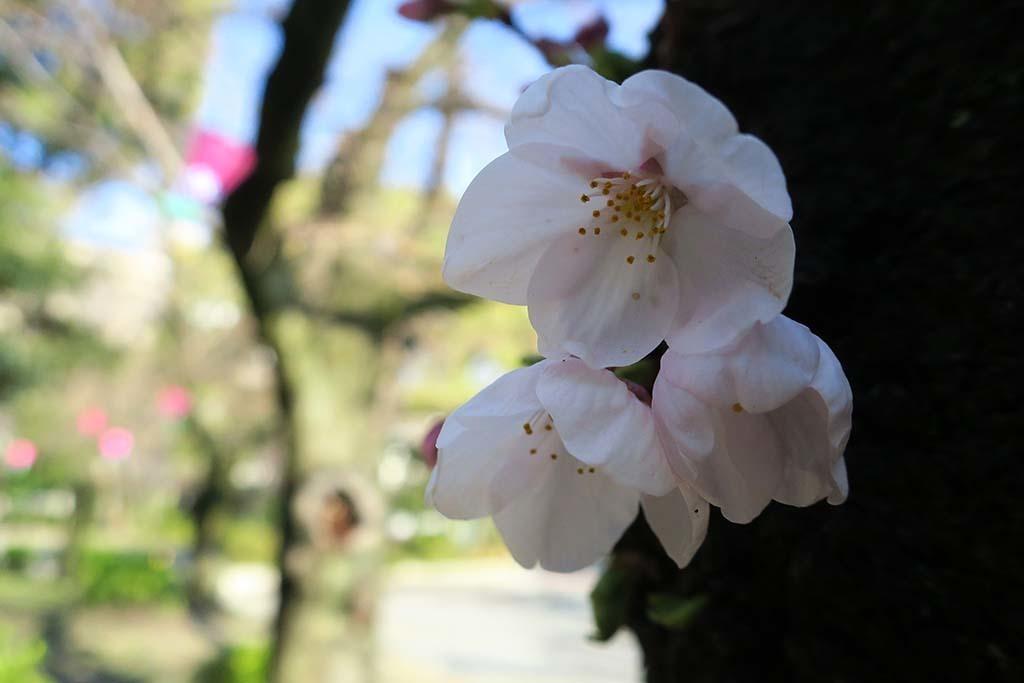 H0327_tsuru_04