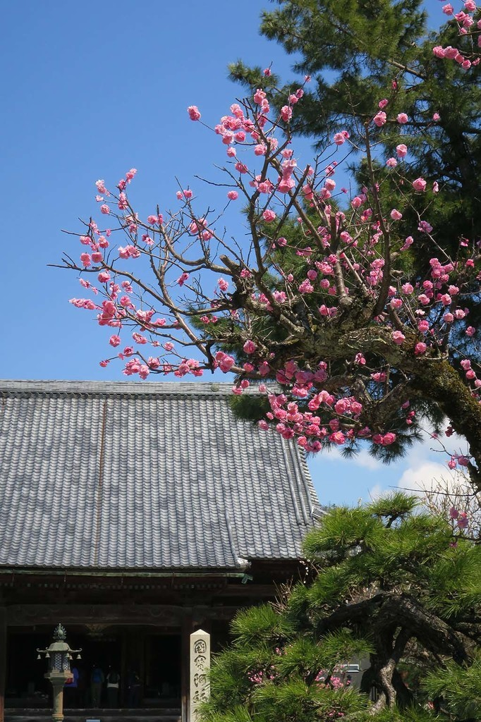 H0402_okubiwa_84