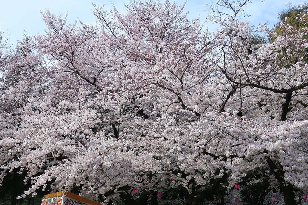 H0406_tsuru_24