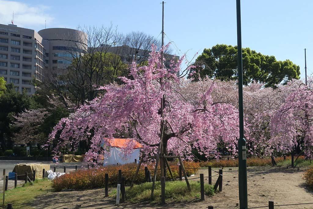 H0413_tsuru_08