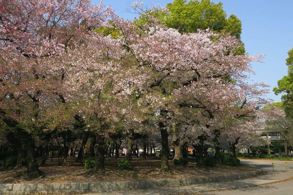 H0414_tsuru_07