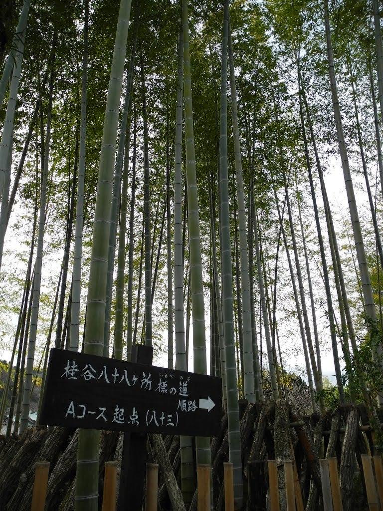 shuzenji_12